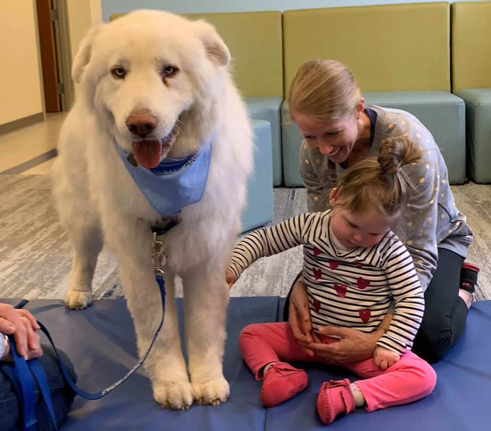 Therapy-dog-2